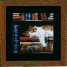 Кошка, спящая на книжной полке (PN-0147121)