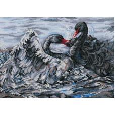 Два черных лебедя (M557)