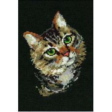 Пёстрый кот (766)