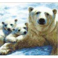 Полярная семья (497)