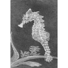 Набор для рисования скетча Royal Brush Морской конек (SKMIN-103)