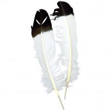 Перья белые с черным кончиком Zucker, Imitation Eagle Quil(B702)