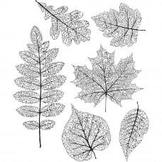 Набор резиновых штампов Tim Holtz Высушенные листья (CMS 376)