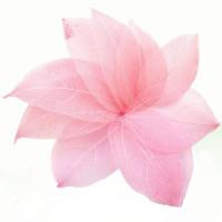 Скелетированные листья Only розовые, 20 шт (593403)